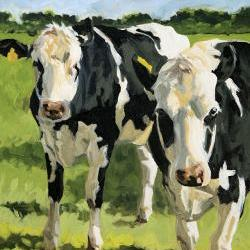 """Cow painting, giclee on canvas print with gallery wrap, 16x20, from an original oil painting, """"Out Standing"""""""